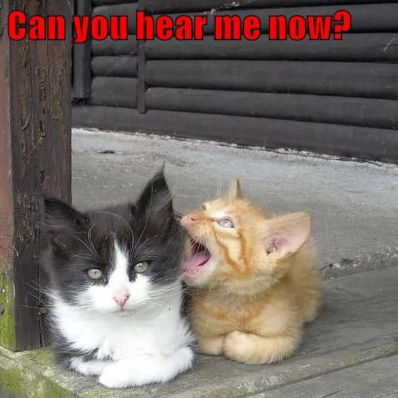 Can You Hear Me Now Cat Memes Funny Cat Memes Funny Cats