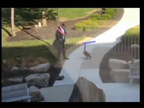 Man Fights Goose with Lightsaber