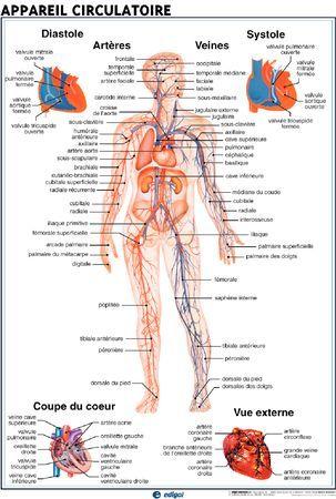 Posters sciences de la vie et de la Terre de Jeulin