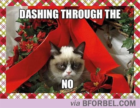 b for bel: Grumpy Cat Hates Christmas