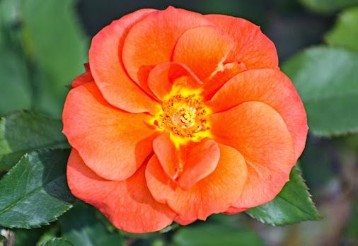 Flora - Coleções - Google+