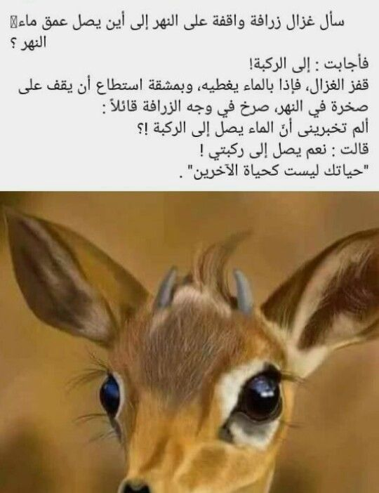 Pin By صل على النبي On صباحات ومسائات Coffee Quotes Arabic Quotes Quotes