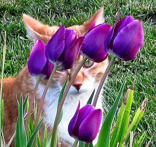 Pin By Kenda Davis 3 Peat On Home Style Dog Flower May Flowers Caturday