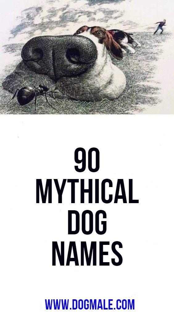 90 Mythical Dog Names Dog Names Girl Dog Names Dog Names Unique