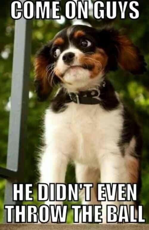 Not Impressed Dog : impressed, Impressed, Funny, Animals,, Animal, Captions,