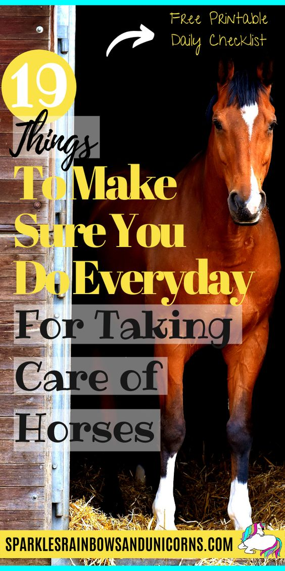 Do you dream of owning a horse? Wondering what the daily care of a   horse includes? If you want a happy healthy horse it starts with proper   daily care which takes time and work every day, 365 days a year.   Depending on what climate you live in and the barn you are at, horse   care routines will almost always vary. However there are basics that   should be met in a horse's everyday care for their mental and physical   well being.