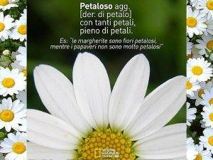 #Petaloso, la parola di Matteo si diffonde sui social media