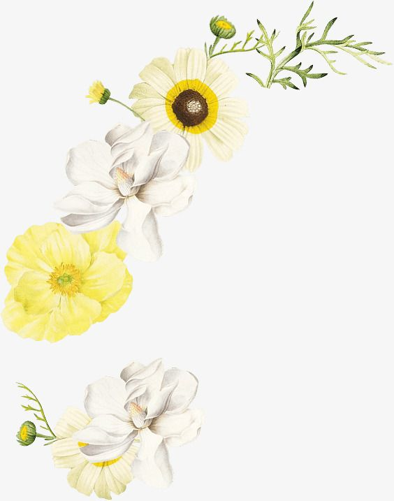 Watercolor Flowers Png And Clipart Watercolor Flowers Flower Png Images White Flower Png