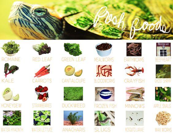 explore pet turtle food turtle mom and more turtles food fresh sliders