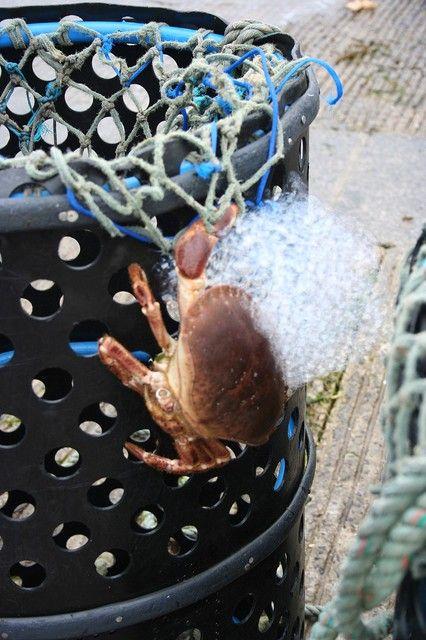 Photo : Crabe,  France, Chalutiers, Le conquet. Toutes les photos de VIVIANE Terrom sur L'Internaute