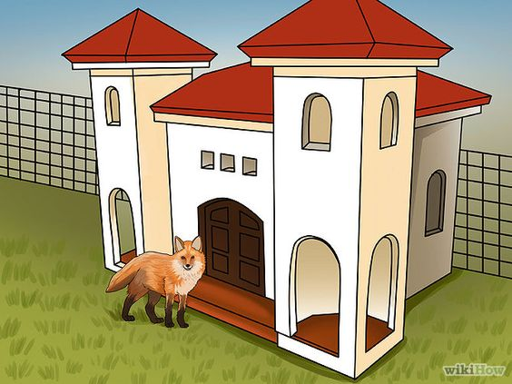 Care for a Pet Fox