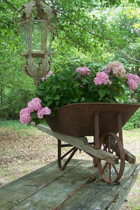 Pink Hydrangea in wheel barrow.: