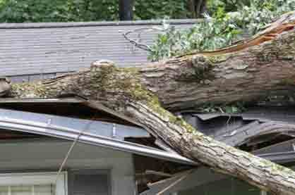 Home Roof Damage by Falling Tree