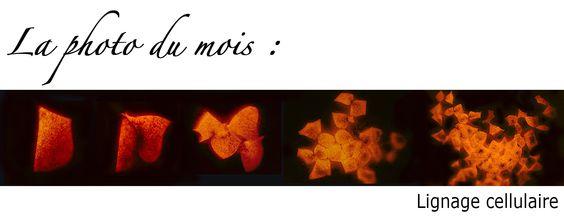 Biologie et Multimedia. Recursos en francés