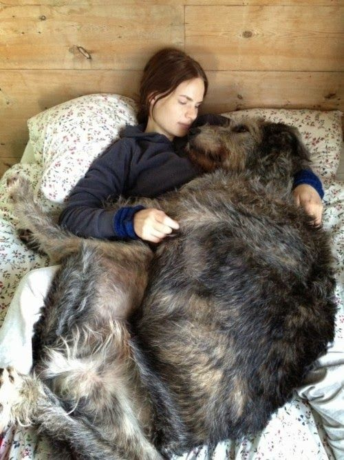5 Dogs who are bigger than their owners.