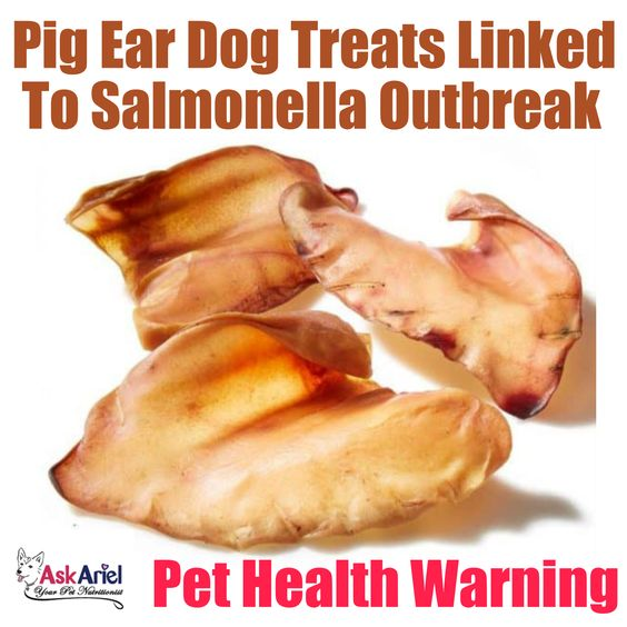 The FDA & CDC have issued warnings not to give pets pig ear treats due to a widespread salmonella outbreak. People have been getting sick after handling the ears & pets could get sick from eating them. Multiple products tested positive for salmonella. For your safety & your pets, the FDA is recommending ALL pig ear treats be avoided & not to touch them. If you have pig ear treats, throw them away in a secure container & carefully clean your hands & all surfaces that came in contact with them.
