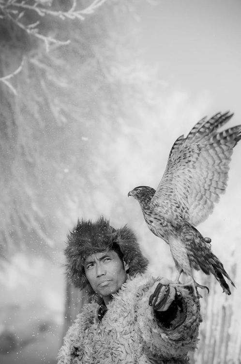 Release of the hawk. Cannot explain it. I've ALWAYS wanted a hawk. This picture fascinates me. It's perfect.: