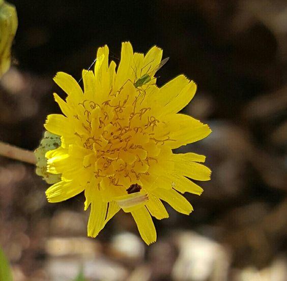 Flor amarelo e de