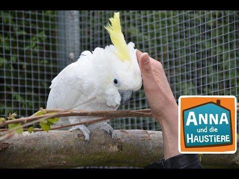 Kakadu Information Fur Kinder Anna Und Die Haustiere Youtube