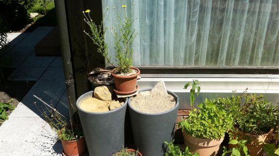 Tipps für den Garten - Unser Engagement für Bienen - Coop Nachhaltigkeit