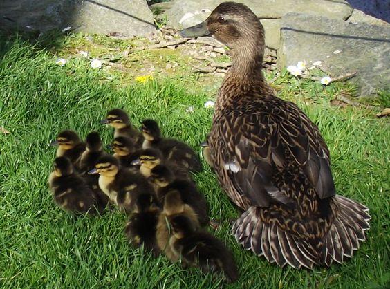 Baby bird advice for the Bailiwick this Spring time  http://www.gspca.org.gg/blog/baby-bird-advice-bailiwick-spring-time