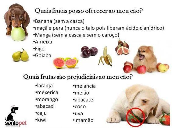 Frases - Frases de Cachorro