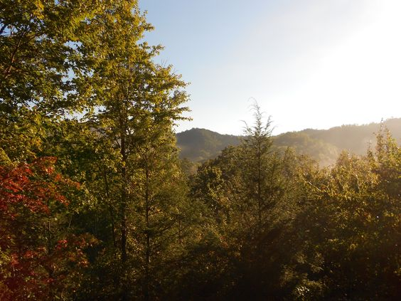 View from the cabin we rented in the Smoky Mountains