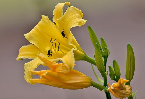 Visite www.flickr.com/photos/fpizarro 3825
