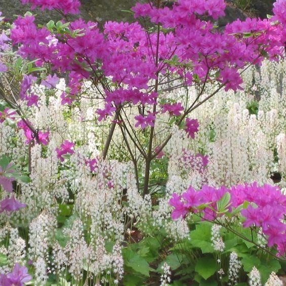 Garden Gate Nursery   Woodland Gardening Part IIIb: Wildflowers | Shady  Garden Plants | Pinterest | Wildflowers, Garden Gate And Gardens