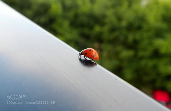 nature's discovery... by lucamoriconi. Please Like http://fb.me/go4photos and Follow @go4fotos Thank You. :-)