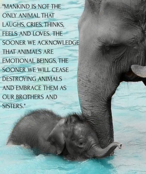 mankind is not the only animal that laughs, cries, thinks, feels and loves, the sooner we acknowledge that animals are emotional beings, the sooner we will cease destroyning animals and embrace them as brothers and sisters. - Anthony Douglas Williams