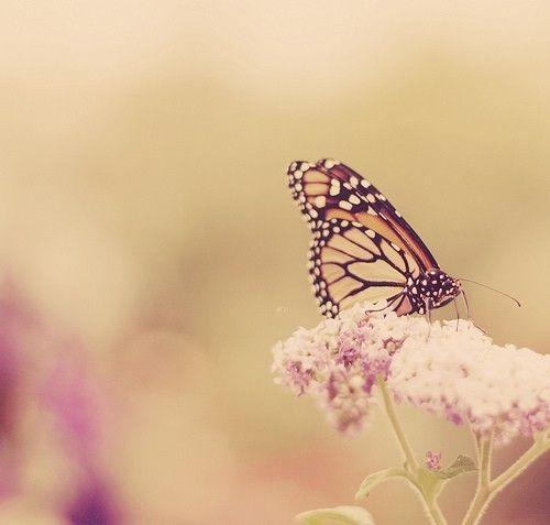 Butterfly  --- 興趣圖譜 Hobby Couple