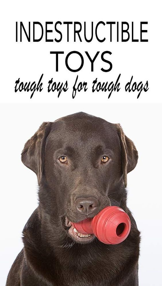 Best Indestructible Dog Toys For Labradors And Other Breeds Dog