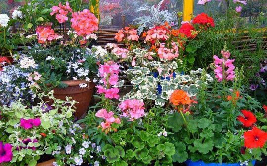 Kwiaty Na Taras Na Slonce I Do Cienia Zielony Ogrodek In 2021 Floral Plants Floral Wreath
