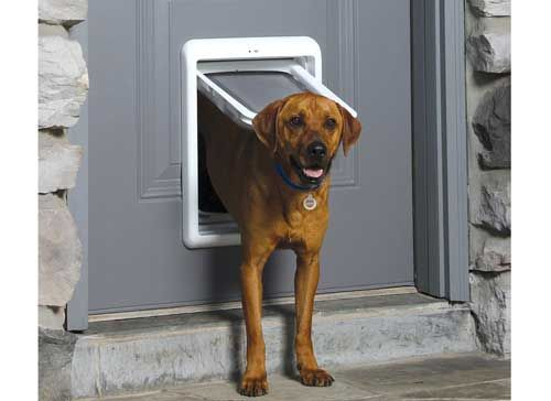 Top 10 Best Automatic Electric Dog Doors Reviews In 2020
