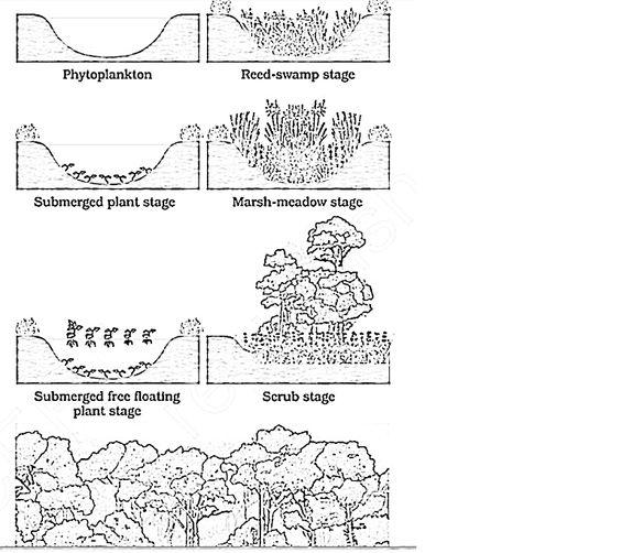 succession | Plant / Ecological Succession | Pinterest ...