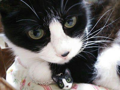 28 best Pet portraits images on Pinterest