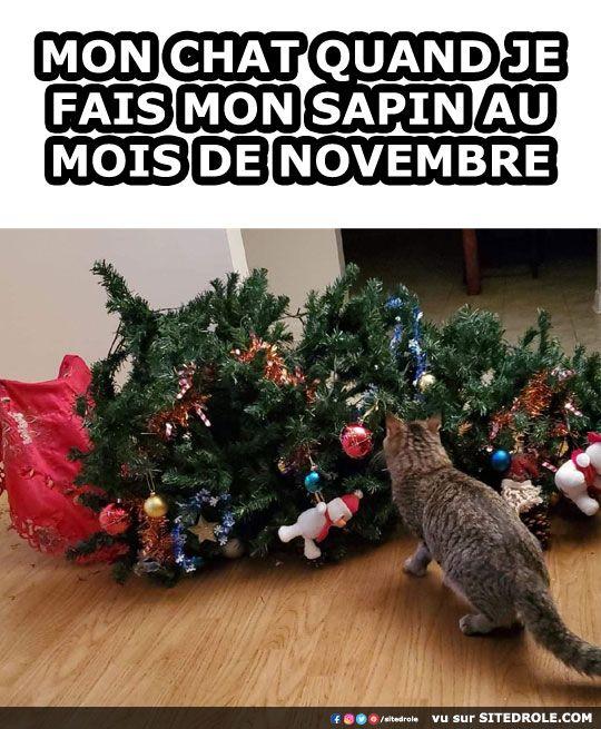 Mon chat quand je fais mon sapin au mois de novembre – image drole hum…