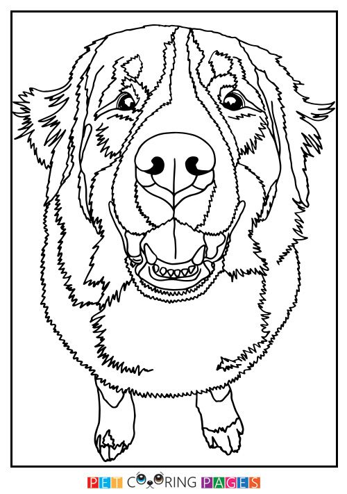 Bernese Mountain Dog Coloring Page Luna Dog Coloring Page