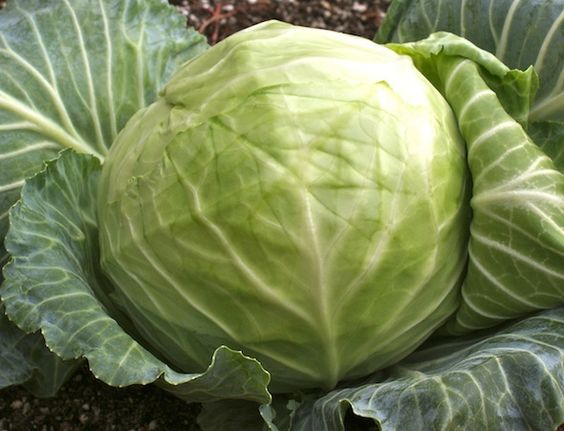 6 Reasons to Drink Fermented Cabbage Juice