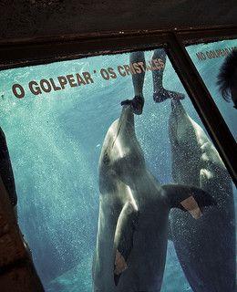 Aquarien: Gefangen im Wasser | Animal Equality Germany