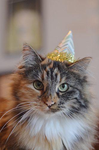 Birthday Wishes from Wylla