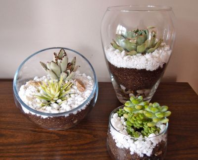 Find Out How To Make Your Own Terrariums Diy Home Decor Crafts