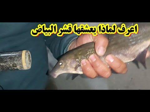 مفاجأة شاهد غرفة الانعاش لطعوم صيد سمك قشر البياض الجزء الثاني لاتنس ا Fish Sports