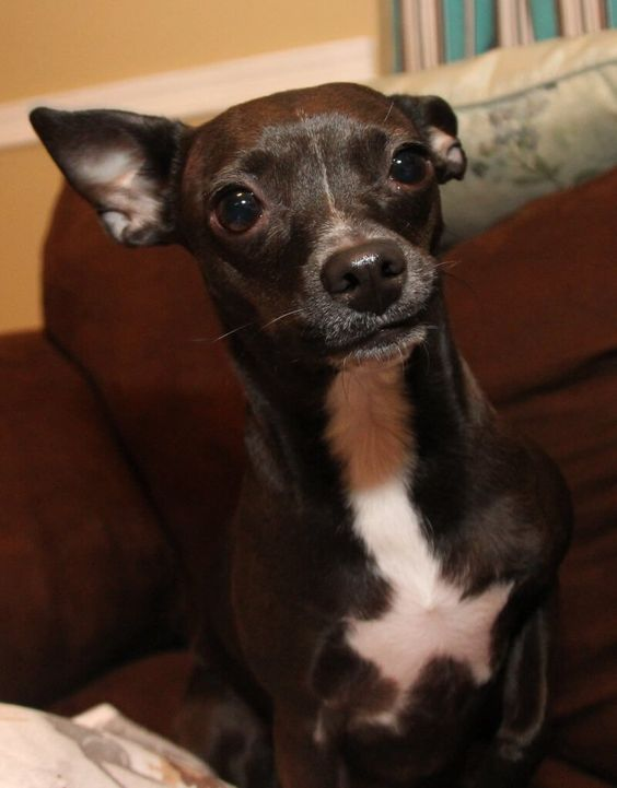 27 of the World's Cutest Dog Breeds (Photos)   Companion Animals  Living   PETA