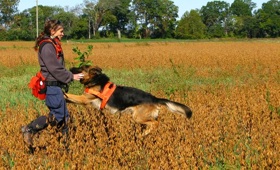 5 Signs You Need To Hire a Dog Trainer