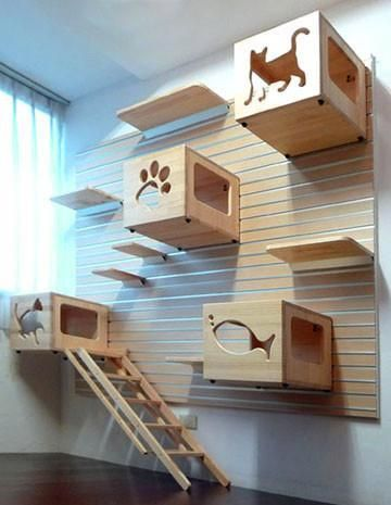 Cats With Thumbs Catsthatactlikedogs Catfacts Cat Room Cat House Diy Decor