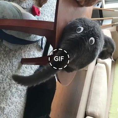 transforme seu gato em um elefante