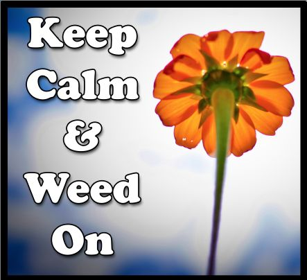 Keep Calm and Weed On