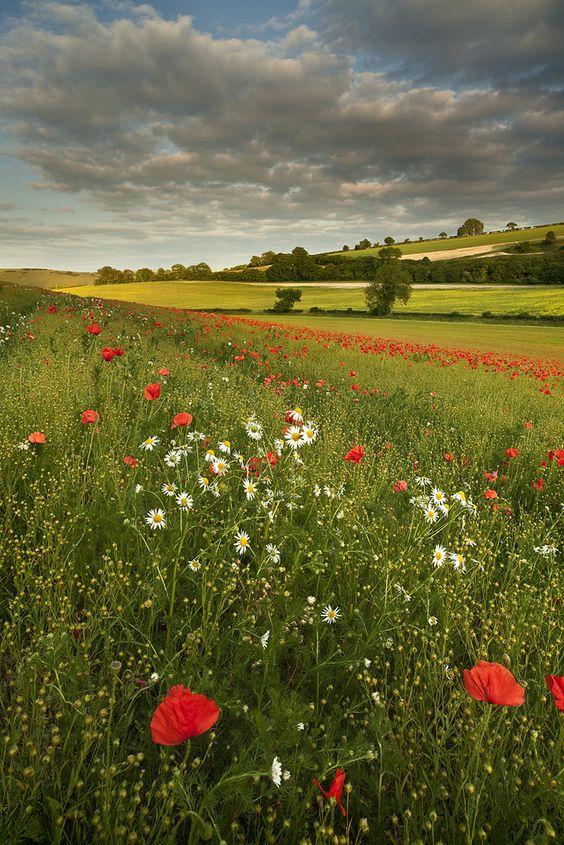 "travelbinge: "" Dorset by Peter Spencer Dorset, England """
